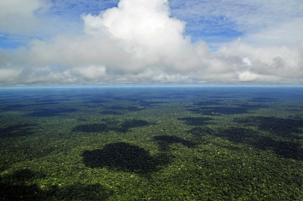 The Forests Of The Western Amazon, A Diverse Ecosystem That Includes Peru And Brazil, May Have Been Contaminated By Widespread Oil Pollution Over The Last 30 Years, According To A 2014 Study. Photo : Wikimedia Commons.